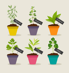 herb garden with pots of herbs set 3 vector image
