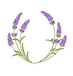 Lavender garland vector