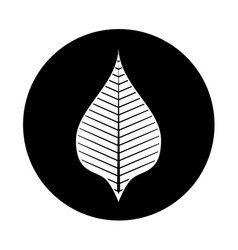 Leaf plant decorative isolated icon vector