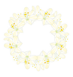 snow white agapanthus wreath vector image