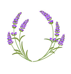 The lavender garland vector
