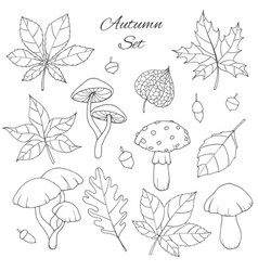 autumn set with oak poplar leaves mushroom acorn vector image