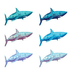 polygonal shark in six colour vector image