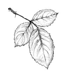 Rose leaf vector