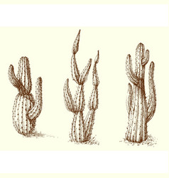 Cactus set hand drawing vector