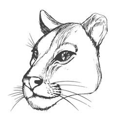 Head lioness vector