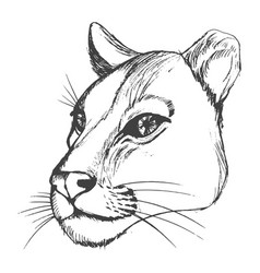 Head of lioness vector