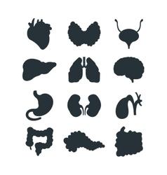 Internal organs silhouette vector image vector image