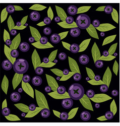 pattern with blueberries on black vector image