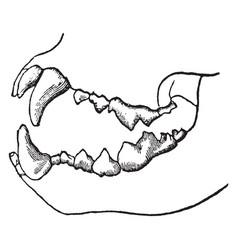 Carnivorous skeleton vintage vector