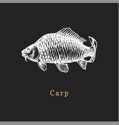 carp on black background fish vector image