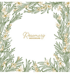 frame made of rosemary drawn with contour lines on vector image