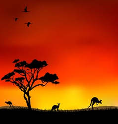 Kangaroos vector image