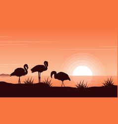 flamingo on riverbank at vector image vector image