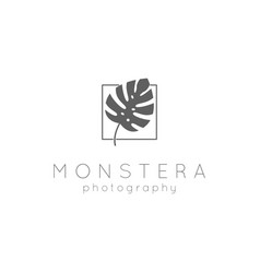 Elegant elegance leaf monstera silhouette vector