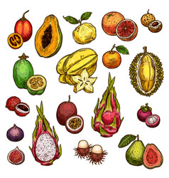Set of ripe exotic fruits vector