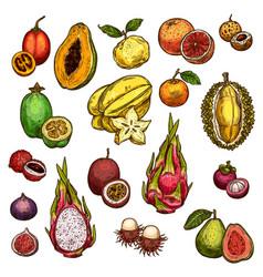 Set ripe exotic fruits vector