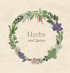 Vintage label of herbs and spices for your design vector image