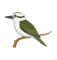 Kookaburra bird on a white background vector