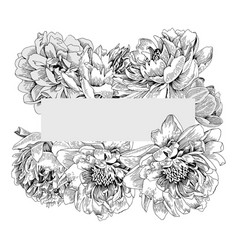 monochrome elegant frame with peony flowers vector image