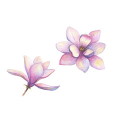 watercolor beautiful magnolia flowers set isolated vector image