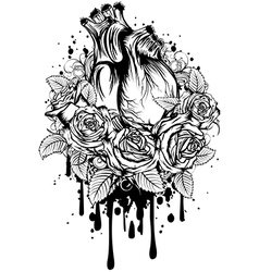 human heart with roses vector image vector image