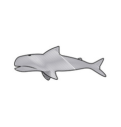 whale wildlife water animal silhouette vector image