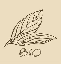 bio leaf logo sketch vector image