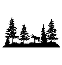 Moose in a pine forest vector