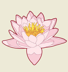 rose petals vector image vector image