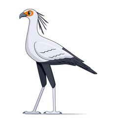 secretary bird on a white background vector image