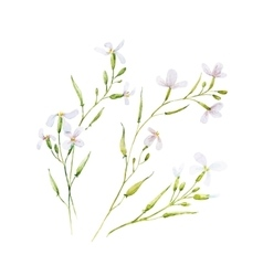Watercolor white flowers vector