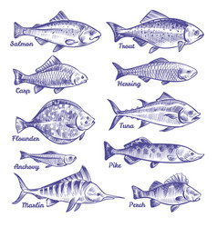 hand drawn fishes ocean sea river fishes sketch vector image