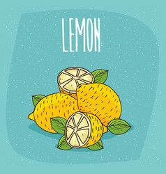 Isolated ripe lemons fruits whole and cut vector