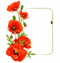 red poppy frame vector image