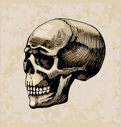 skull man colored painte vector image