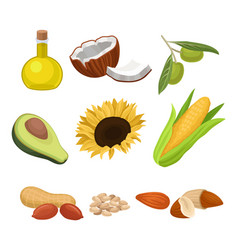 source of edible oil set coconut avocado vector image