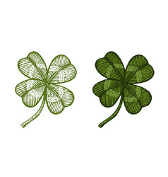 vintage green lucky clovers vector image