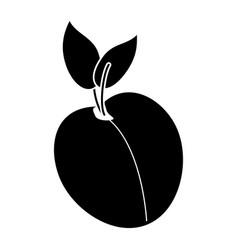 apricot fruit nutrition pictogram vector image