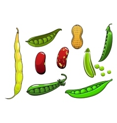 Cartoon fresh legumes and vegetables vector