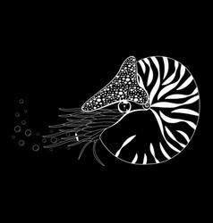 Chambered nautilus pompilius mollusc cephalopod vector