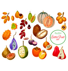 exotic tropical fruits and berries icons vector image