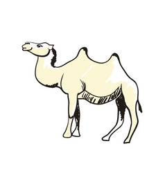 arabian camel hand drawn icon vector image