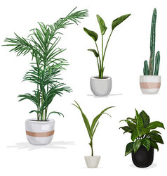 Room plants hand drawn vector image vector image