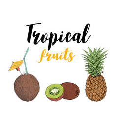 tropical fruit kiwi pineapple coconut cocktail vector image