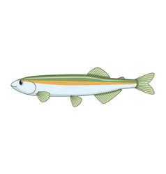 Australian smelt fish on a white background vector