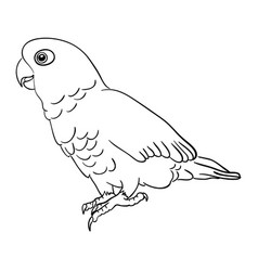 Cockatoo bird line art 01 vector