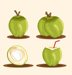 coconut set vector image