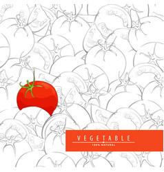 Fresh ripe tomatoes vector