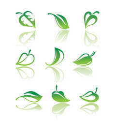 leaves of plants vector image